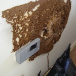 termite damage to wall behind bedhead