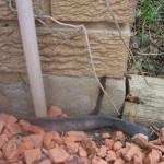 termite lead over concrete slab termite lead over concrete slab
