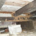 termite mud pack on subfloor timbers